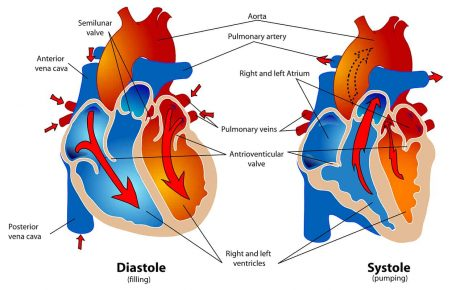 Cardiovascular system - Complete story of the heart & blood circulation