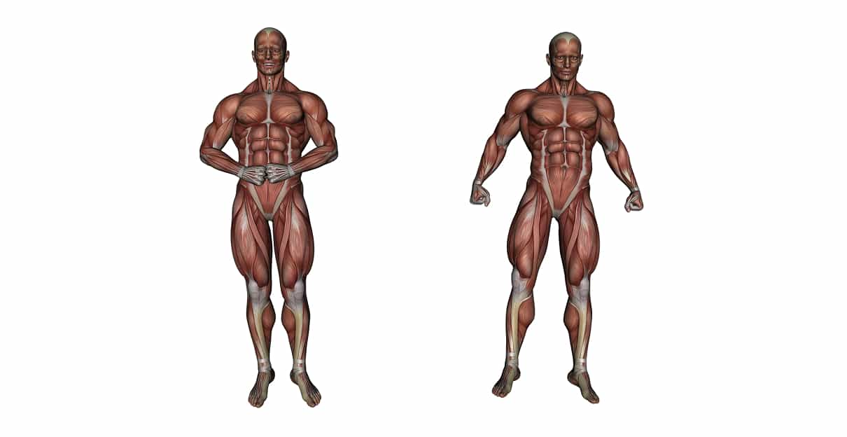 Muscular system - Types of muscles, characteristics & functions
