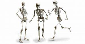 Skeletal system - Introduction & functions of skeletal system