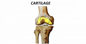 Cartilage - Introduction, Structure, Formation And Types Of Cartilage
