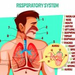 The Introduction and Organs Associated With Respiratory System